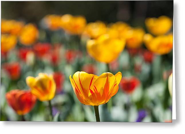Greeting Card featuring the photograph Spring Is Upon Us by Nathan Rupert