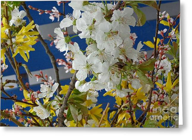 Spring Life In Still-life Greeting Card
