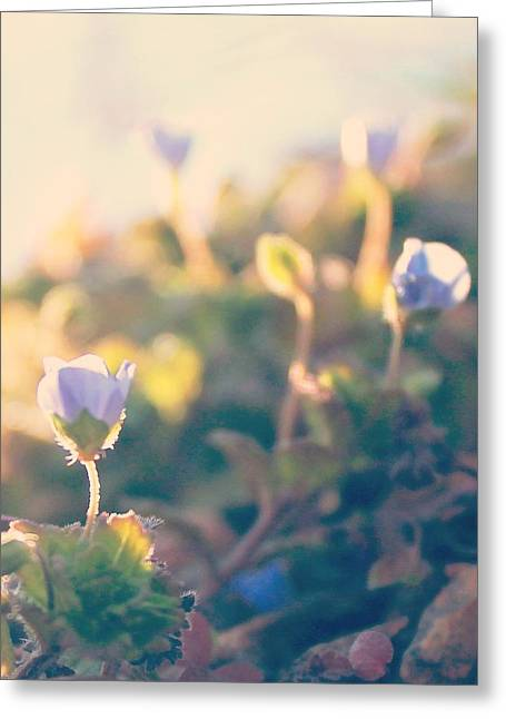 Greeting Card featuring the photograph Spring Light And Wildflowers by Candice Trimble