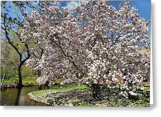 Greeting Card featuring the photograph Spring Magnolia by Janice Drew