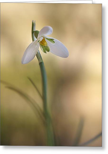 Greeting Card featuring the photograph Spring Messenger by Annie Snel