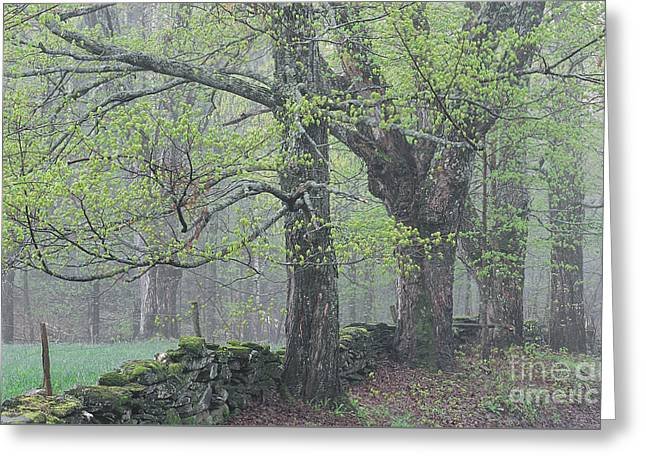Greeting Card featuring the photograph Spring Mist by Alan L Graham