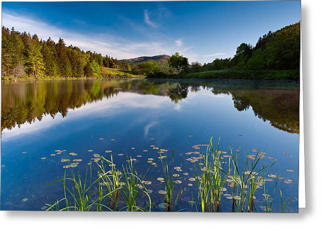 Spring Morn At The Pond Greeting Card by Michael Blanchette