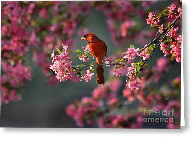 Spring Morning Cardinal Greeting Card