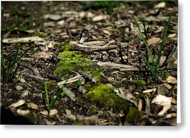 Spring Moss Greeting Card