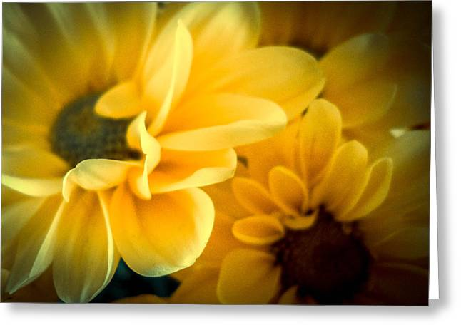 Spring Mums Greeting Card by Judy Hall-Folde