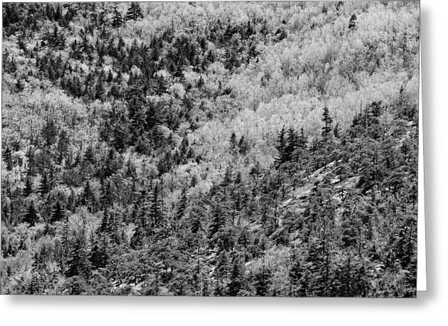 Spring On Cadillac Mountain Acadia National Park Black And White Greeting Card by Keith Webber Jr