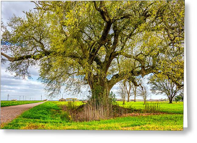 Spring On The Delta Greeting Card by Steve Harrington