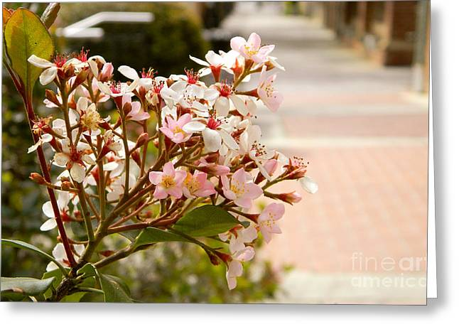 Spring On The Street Greeting Card
