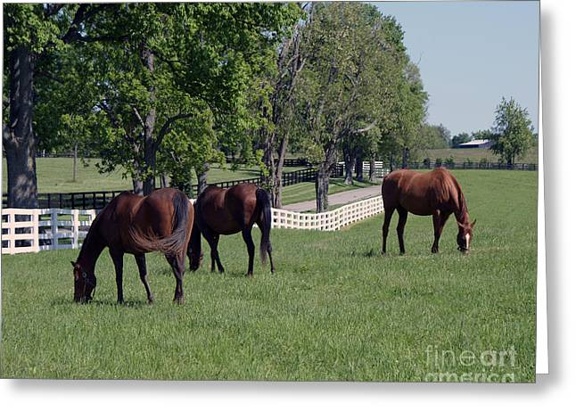 Keeneland Paintings Greeting Cards - Spring Paddock Greeting Card by Roger Potts