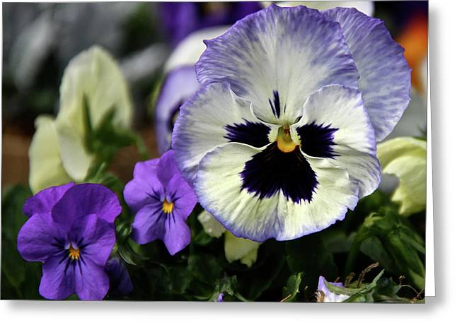 Spring Pansy Flower Greeting Card by Ed  Riche