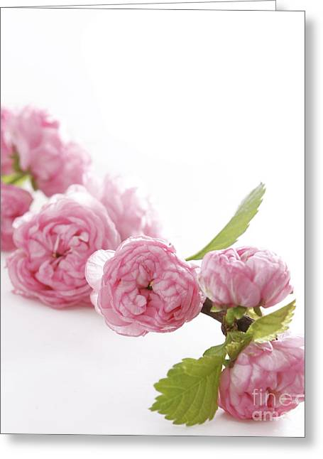 Spring Pink Flowers Greeting Card by Boon Mee