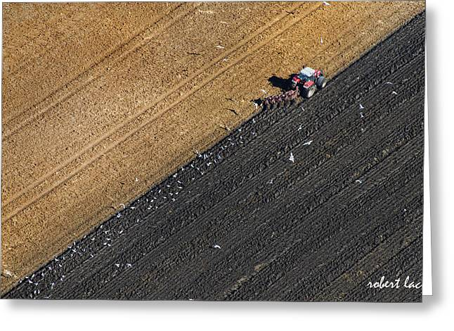Spring Plowing Greeting Card by Robert Lacy
