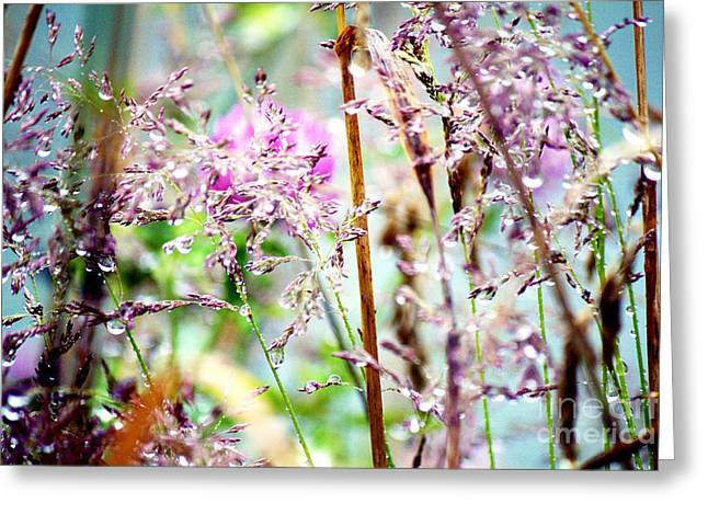 Spring Rain Grasses Greeting Card by Alanna DPhoto