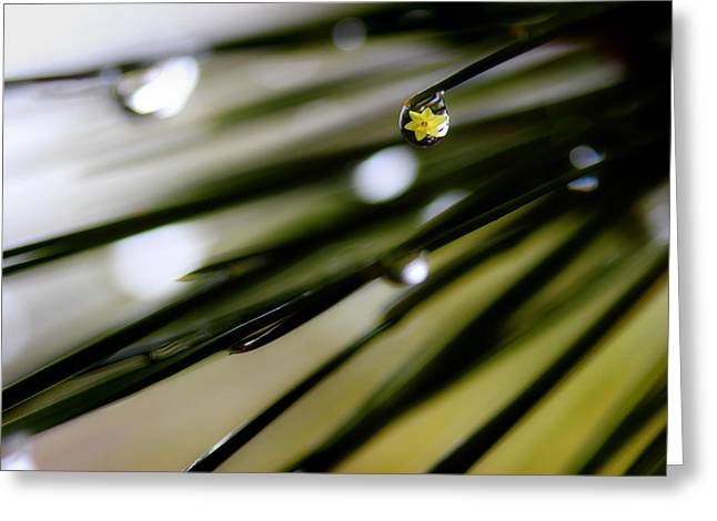 Spring Rain On The Pines Greeting Card by Michael Eingle