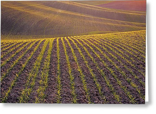 Spring Rows Greeting Card