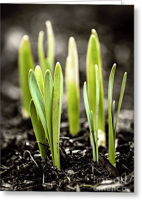 Spring Shoots Greeting Card by Elena Elisseeva