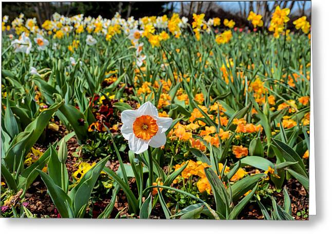 Spring Smiles Greeting Card by Jeanne May