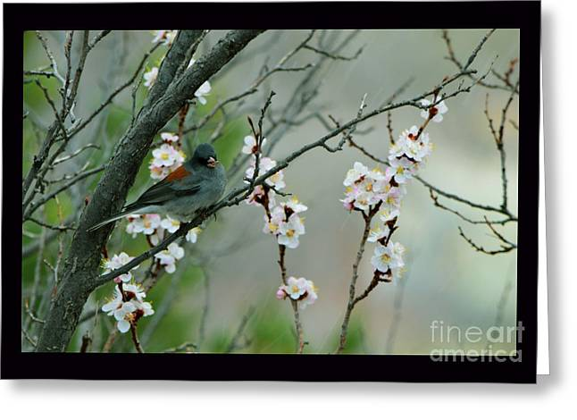 Spring Snow In Apricots Greeting Card