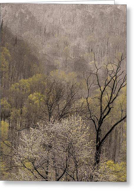 Spring Snow Greeting Card by Tom  Reed