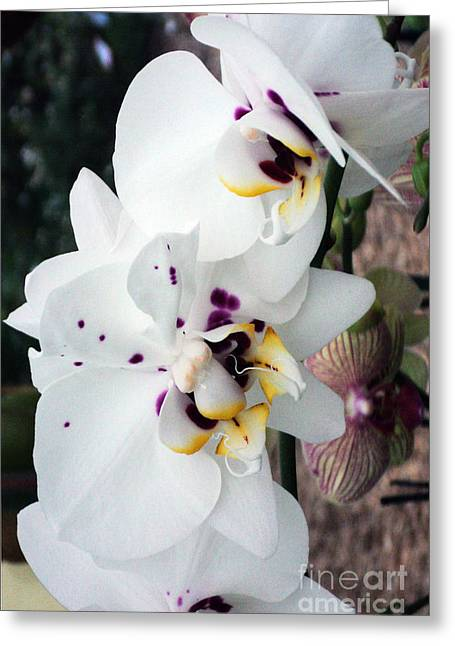 Spring Splash Orchid Greeting Card