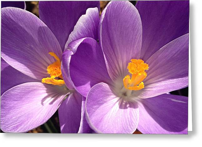 Greeting Card featuring the photograph Spring Sprang by Gwyn Newcombe