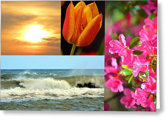 Spring Summer Collage Greeting Card by Sandi OReilly