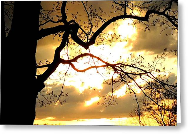 Spring Sunset Greeting Card