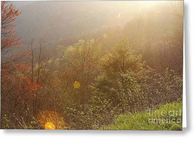 Spring Sunshine Greeting Card by Jonathan Welch