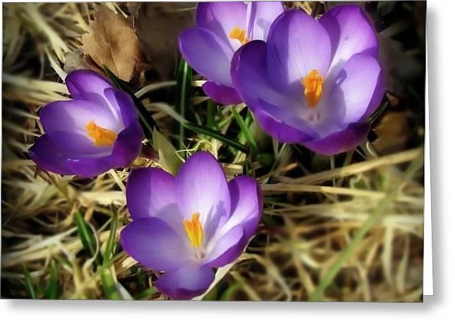 Spring Greeting Card by Sylvia  Niklasson