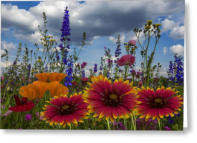 Spring Symphony Greeting Card by Debra and Dave Vanderlaan
