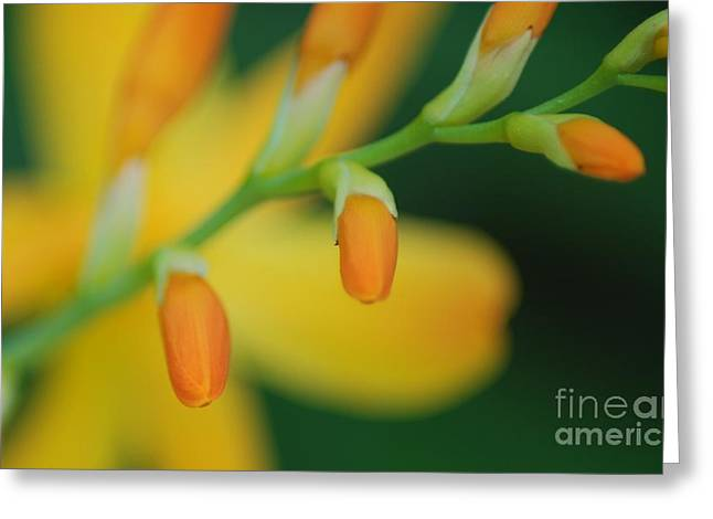 Greeting Card featuring the photograph Spring Time by JRP Photography