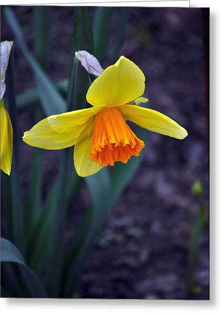 Spring Time Greeting Card by Larry Jones