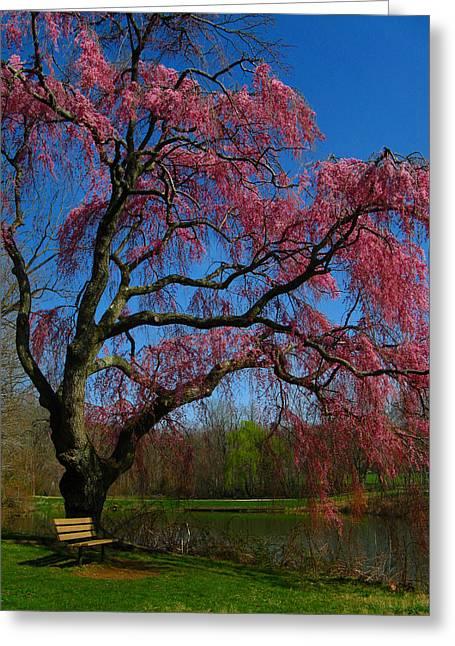 Spring Time Greeting Card by Raymond Salani III