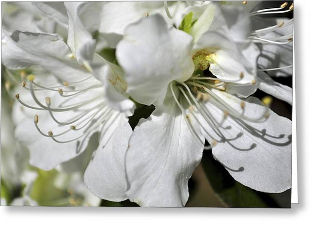 Greeting Card featuring the photograph Spring Time by Sandy Molinaro