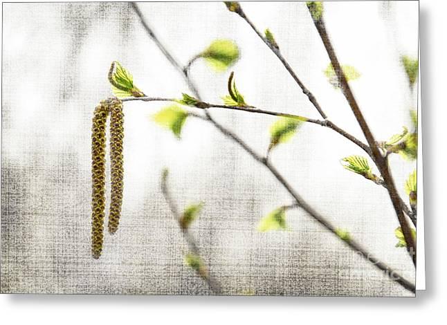 Spring Tree Branch Greeting Card by Elena Elisseeva