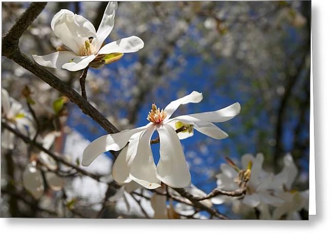 Spring Trees 1 Greeting Card