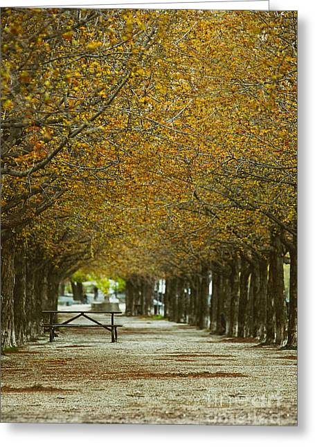 Greeting Card featuring the photograph Spring Trees Blossoming In Montreal by Sandra Cunningham