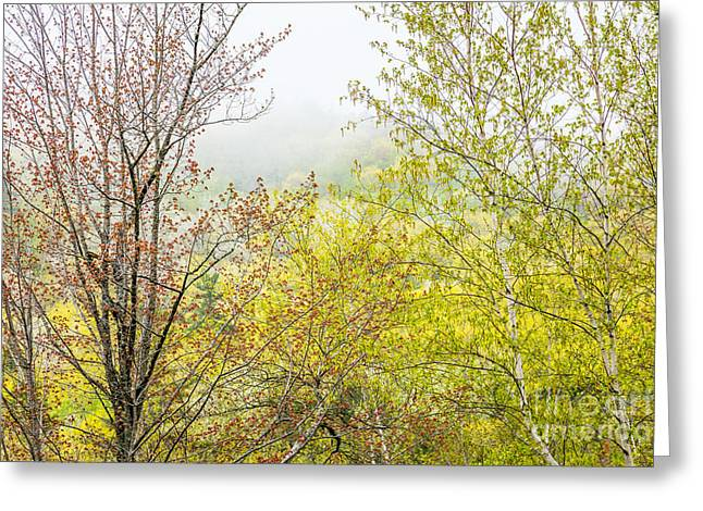 Spring Trees In Acadia Greeting Card by Susan Cole Kelly