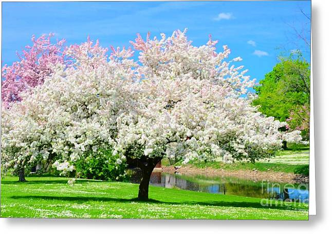 Spring Trees Greeting Card by Kathleen Struckle