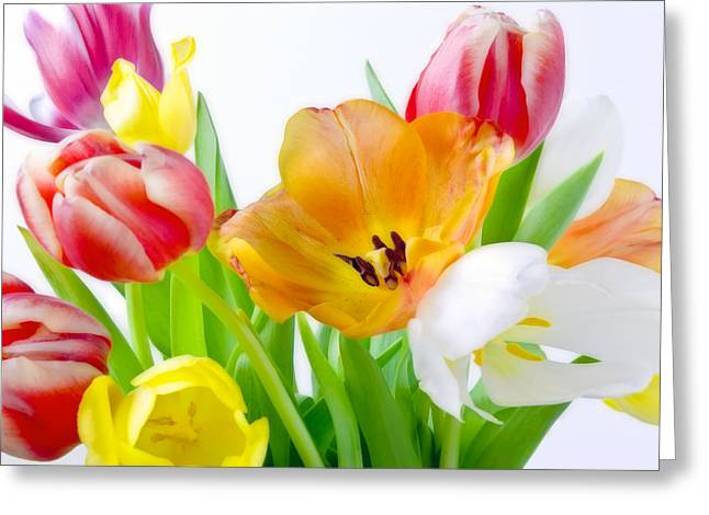 Bright White Red Orange Yellow Pink Tulips Flowers Art Work Photography Greeting Card by Artecco Fine Art Photography