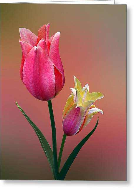 Greeting Card featuring the photograph Spring Tulips by Judy  Johnson