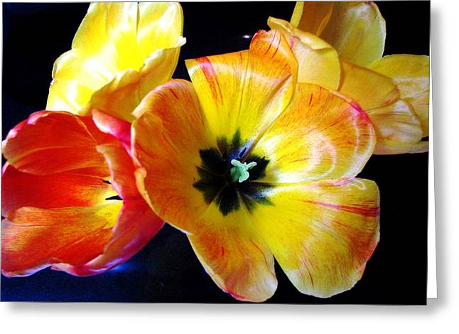 Spring Tulips Xx Greeting Card by Judyann Matthews