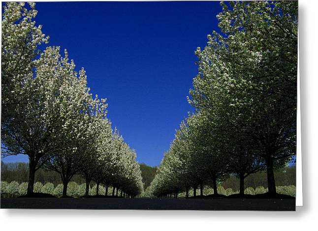 Spring Tunnel Greeting Card
