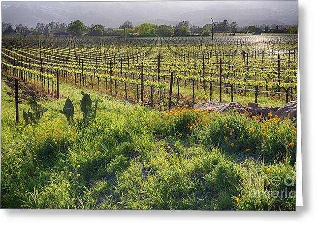 Spring Vine And Poppies In Napa Valley Greeting Card by George Oze
