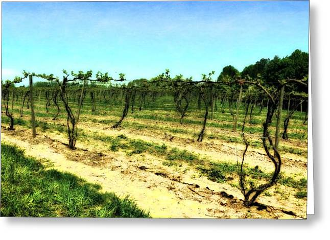 Spring Vineyard Ll Greeting Card by Michelle Calkins