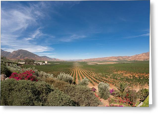 Spring Vinyard In Ensenada Mexico Greeting Card by Scott Campbell