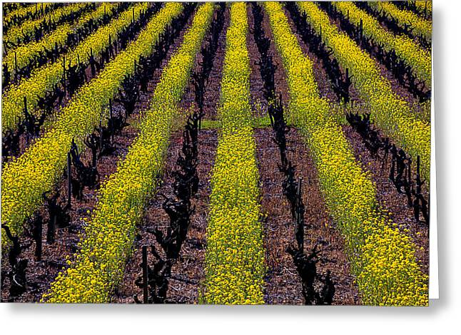 Spring Vinyards Greeting Card