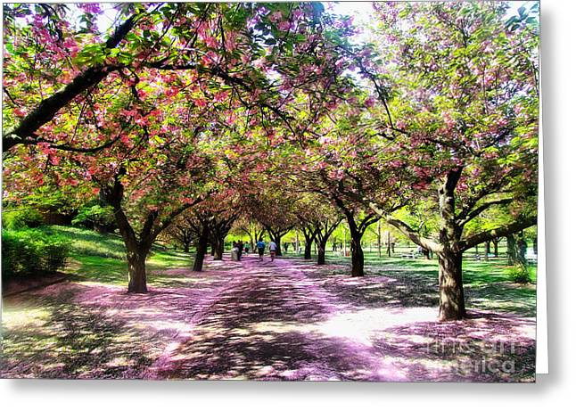 Spring Walkway Lined By Blooming Cherry Trees Greeting Card by Nishanth Gopinathan