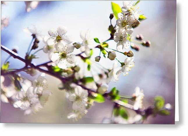 Spring White Cherry Tree  Greeting Card by Jenny Rainbow